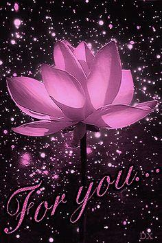 flor de lótus Rosa de animação sobre um fundo de voar brilho (Para você / Por você), SIFCO-de-rosa flor de lótus em um fundo de brilho voando (Para você / Por você)