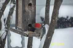 our woodpecker