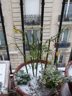 Belle chute de neige à Paris   À dix jours de l'arrivée officielle du printemps, l'hiver reprend vigueur et met une belle pagaille. Après l'intense épisode neigeux qui s'est abattu sur le nord de la France hier mardi, c'est le froid qui va s'accentuer.  http://www.pariscotejardin.fr/2013/03/belle-chute-de-neige-a-paris/
