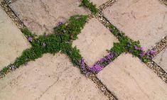 Alys Fowler: plants for patio cracks - Was Sie Über Gartenarbeit Wissen Müssen Patio Plants, Cool Plants, Outside Steps, Herb Garden In Kitchen, Gardening, Back Gardens, Raised Garden Beds, Garden Inspiration, Garden Ideas