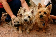 Dad, Mom, Puppy by sunhorseflower, via Flickr