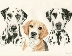 """Check out new work on my @Behance portfolio: """"Snoop, Marley & Aero"""" http://on.be.net/1Paquc7"""