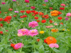 Zinnias.  Plant in pots too - they look awesome in clay pots.  But they get really big so don't crowd too many in there.  3 in a BIG clay pot will fill it in nicely.