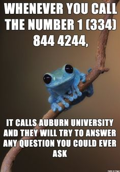 Phone Question Line -- I'm probably contributing to their eventual deluge, but it appears to be legit and that's just cool.  Also, I like the blue frog.