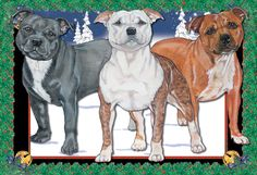 Staffordshire Bull Terrier Christmas Cards (Pack of 10)