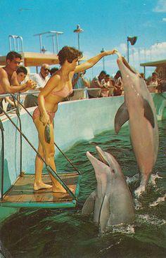 Seaquarium - Miami, Florida