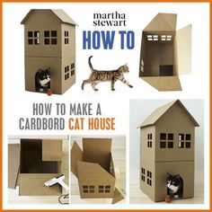 Cardboard cat house and like OMG! get some yourself some pawtastic adorable cat apparel!
