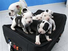 Man charged after six puppies found in suitcase  http://www.letssmiletoday.com/news/man-charged-after-six-puppies-found-in-suitcase