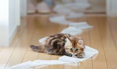 Cat playing with toilet paper Baby Animals Pictures, Funny Animal Pictures, Cute Baby Animals, Funny Animals, Funny Cat Videos, Funny Cats, Kittens Cutest, Cats And Kittens, Kitty Cats