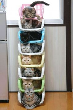 look at all of those freakin cats