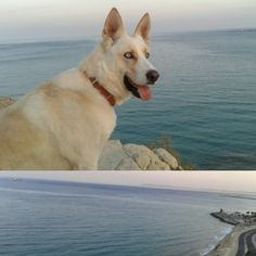 Paseo perfecto #Riddick #milobo #Alicante #sueños #metas #objetivos