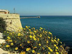 Spring in Malta | by multiflora