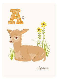 A is for Alpaca  ABC wall art  nursery wall art by SeaUrchinStudio