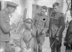 A group of British soldiers with their pet mascot, a baboon. They are servicemen of the Royal Engineers from South Africa, who landed in Belgium in Oct served through all 3 Battles of Ypres, Loos and Somme, now serving on the Italian front. Battle Of Ypres, Battle Of The Somme, Ww1 Photos, History Photos, British Soldier, British Army, World War One, First World, The Great