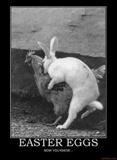 which came first the chicken or the rabbit  lmfao