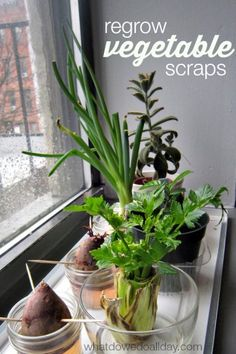 Grow Vegetables Fun plant science activity for kids: how to regrow from vegetable scraps. - Explore plant science for kids with this fun indoor gardening activity that will get them regrowing vegetables scraps and turning garbage into food! Vegetable Garden, Garden Plants, Indoor Plants, Garden Bed, Growing Veggies, Growing Plants, Growing Lettuce, Container Gardening, Gardening Tips