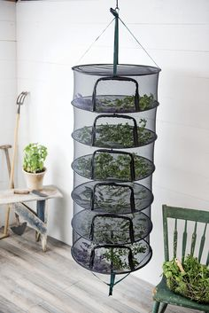 t Herb Drying Rack Stack!t Herb Drying Rackt Herb Drying Rack awesome made mine out of old picture frames & mesh.Learn how to dry medicinal herbs with this hanging dry rack for natural remedies and healing.Super useful hacks to dry herbs quickly & ea