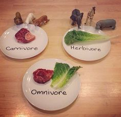 Animal Study - carnivore, herbivore, omnivore. How much simpler can it be that this perfect visual?