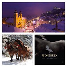 Serving equestrian needs in the Trencin region and beyond - simply mannEQUIn! Bratislava Slovakia, Horseback Riding, Equestrian, Squares, Horses, Instagram Posts, Movie Posters, Bobs, Film Poster