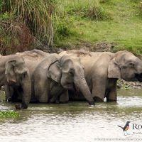Asian Elephants in Kaziranga by Markus Lilje