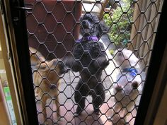 We Want in! - Cousin Penny, Marlah May and Patrick Mcgregor