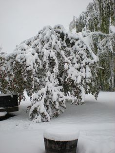Calgary, Alberta - Sept. 10/2014 - Looks like my gardening has come to an unusual and abrupt end for the year. Apples still on the trees, nothing left but the clean up. So sad.