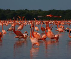 Maravillas naturales de México