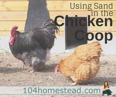 Sand is becoming a very common coop bedding. It's easy to see why. Sand has so many benefits. When used properly, I think it's the perfect bedding.