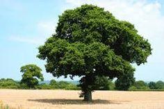 tree - ค้นหาด้วย Google