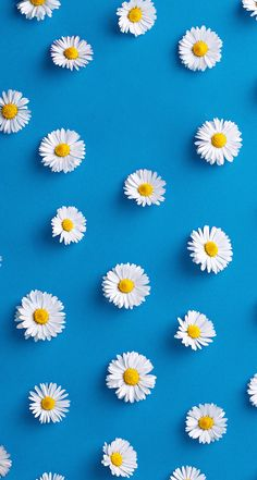 Cute Flower Wallpaper For Iphone Tumblr Iphone Wallpaper, Wallpaper For Your Phone, Screen Wallpaper, Cool Wallpaper, Wallpaper Backgrounds, Pink Daisy Wallpaper, Pattern Wallpaper Iphone, Wallpaper For Mobile, Cute Backgrounds For Iphone