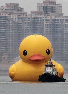 The world's largest rubber duck—a conceptual artwork by Florentijn Hofman—has just arrived in Hong Kong.