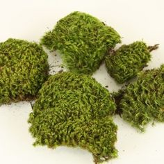 Moss to attach to doors and window frames $4