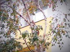 Veverička na Lachovej ulici od fanúšika Petra. Petra, Relax, Plants, Plant, Planets