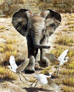 В мире животных и птиц. Часть 1.. Обсуждение на LiveInternet - Российский Сервис Онлайн-Дневников