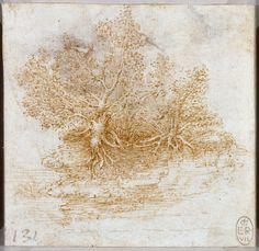 Leonardo da Vinci - Drawings - Plants - 15.jpg