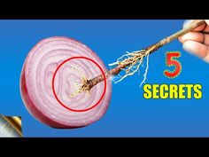 In today's episode, we will learn about 5 unbelievable uses or benefits of Onions, Onion Peels, Skins and Onion Juice in gardening. Specially the onion peel . Onion Leeks, Onions, Organic Gardening Tips, Gardening Hacks, Vegetable Gardening, Fresh Aloe Vera, Onion Juice, Comment Planter, Worm Composting