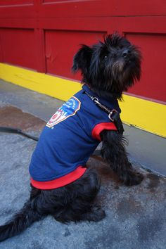 Royal Animals Official FDNY Patch Blue Sweatshirt with Red Trim Royal Animals, Pet Clothes, Your Dog, Patches, Pets, Sweatshirts, Blue, Animals And Pets, Hoodies
