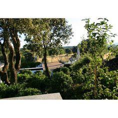 Garden Design. Terrace and swiimingpool.