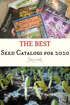 Seed Catalogs for 2020 Find out what are the best seed catalogs for your garden in Plenty of flowers, vegetables, fruits and herbs for your garden. Garden Catalogs, Plant Catalogs, Seed Catalogs, Perennial Vegetables, Container Gardening Vegetables, Perennial Plant, Different Fruits And Vegetables, Home Vegetable Garden, Fruit Plants