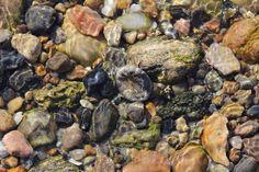 Søpindsvin i vandkanten, mens forårslyset skinner og viser stenenes detaljer så flot