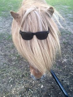 Horse Sense Wirral - Chico ready for the summer #FridayFund #Fundraising #Giving #Horse