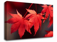 Stunning Red Autumn Leaves floral canvas from only £19.99 at Infusion Art http://www.infusionart.co.uk/products/Stunning-Red-Autumn-Leaves-251318.aspx