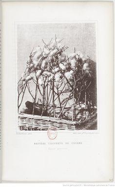 Études sur la maladie des vers à soie... / par M. L. Pasteur,... | Gallica