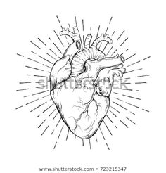 Hand drawn human heart with sunburst anatomically correct art. Flash tattoo or p. - Hand drawn human heart with sunburst anatomically correct art. Flash tattoo or print design vector - Human Heart Tattoo, Human Heart Drawing, Anatomical Heart Drawing, Anatomical Heart Tattoos, Heart Drawings, Tattoo Flash, Coeur Tattoo, Adobe Illustrator, Heart Sketch