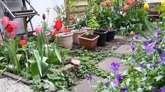 April in my tiny little garden   tinylittlegarden.nl