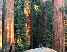 Seeing Forests - California Native Plant Society