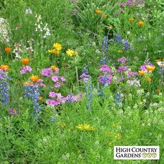 Dry Area Wildflower Seed Mix | Low Water Plants, Eco Friendly Landscapes from High Country Gardens