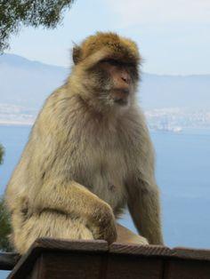 Gibraltar By Grant. – tour4four