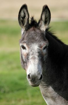 This looks JUST like our Calamity!  I love that Donkey so much!  She gives me a smile every day when I get home from work!