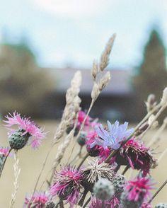 Pick Me Up, Dandelion, Poems, Boho, Lifestyle, Instagram Posts, Flowers, Plants, Dandelions